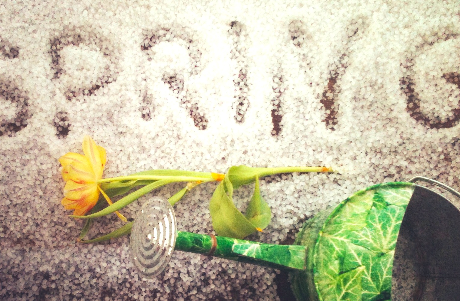 Spring_smf