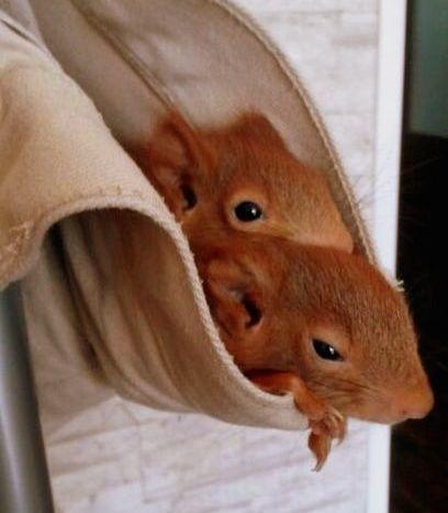 Eichhörnchen_smf