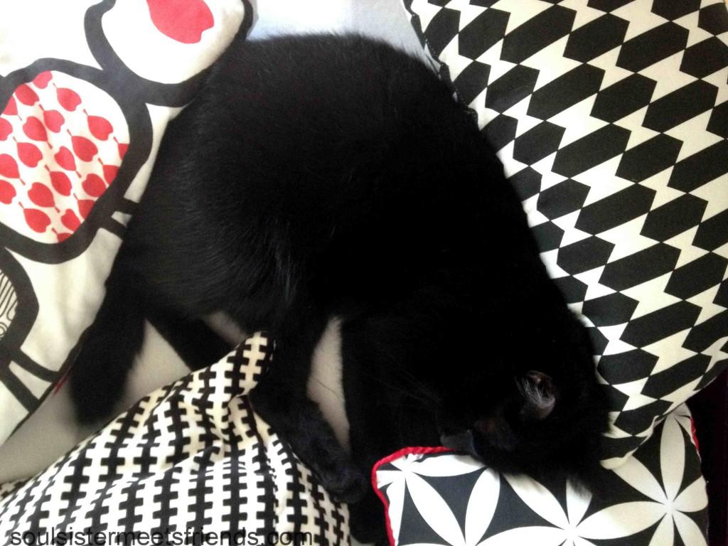 Sonntagsglück-Haustier-Katze-Blogparade