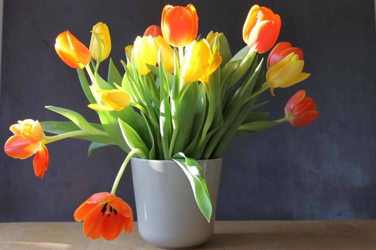 Frühling Tulpen smf