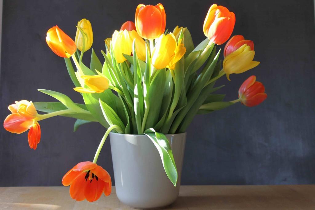 #ichliebetulpen-tulpen-gewinnspiel