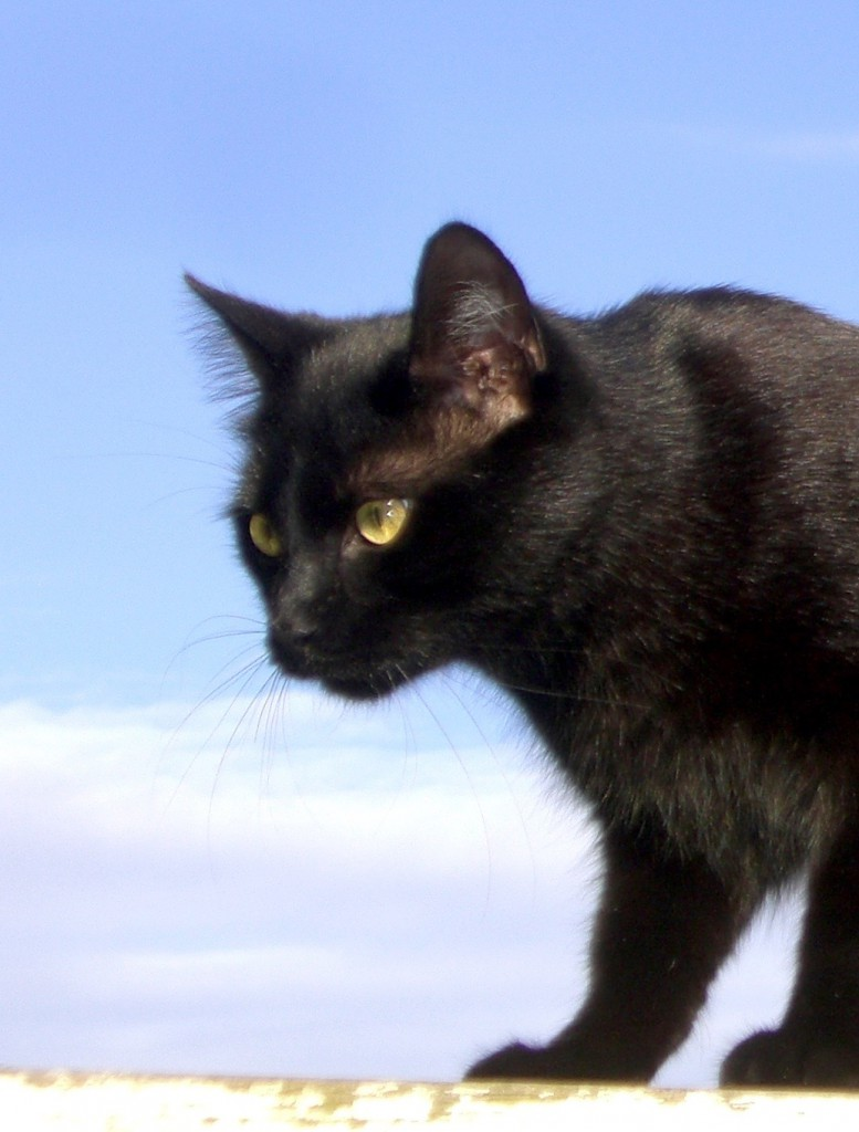 Blogparade-sonntagsglück-haustier-Katze-soulsistermeetsfriends