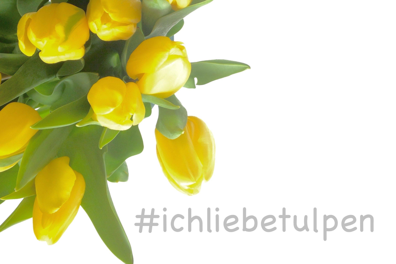 #ichliebetulpen-keukenhof-holland-soulsistermeetesfriends