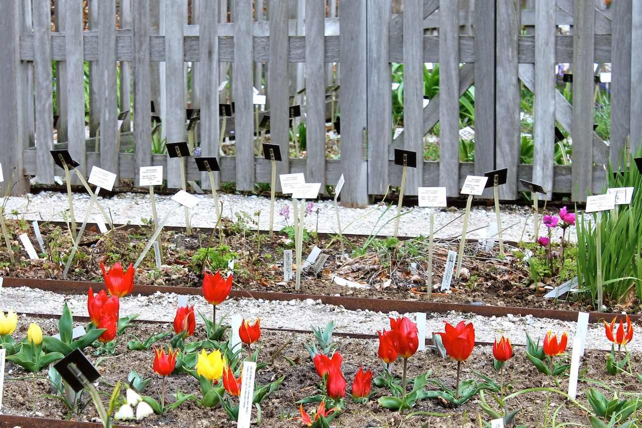 Ein Tulpenbeet an genau der gleichen Stelle wie vor Hunderten von Jahren
