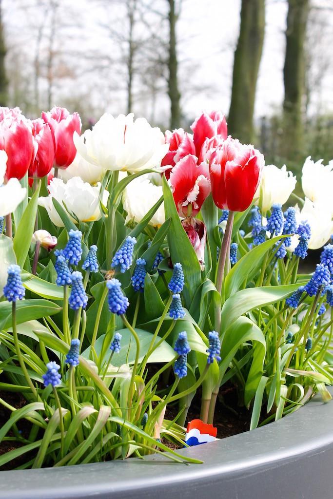 Tulpen-Frühblüher-Keukenhof-soulsistermeetsfriends