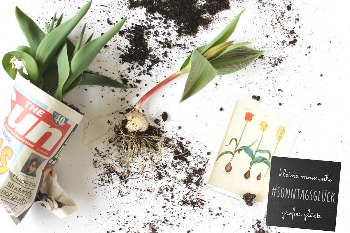 #sonntagsglück-Blogparade-Tulpen-pflanzen-soulsistermeetsfriends