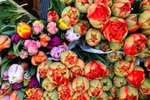 Münster-markt-amDom-Tulpen-soulsistermeetsfriends