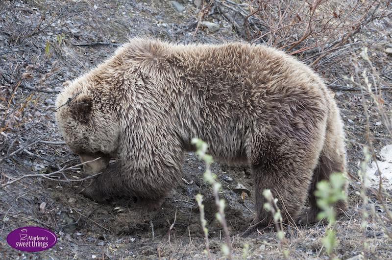 fuenf-fragen_an_marlenes_sweet_things_soulsistermeetsfriends_grizzli_alaska
