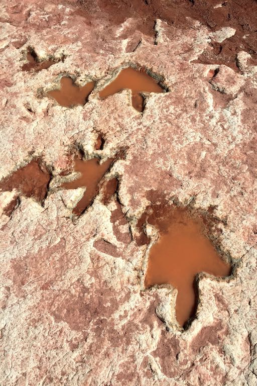 dinosaur_tracks_and_footprint_dinosaurier_spuren_navajo_usa_soulsistermeetsfriends