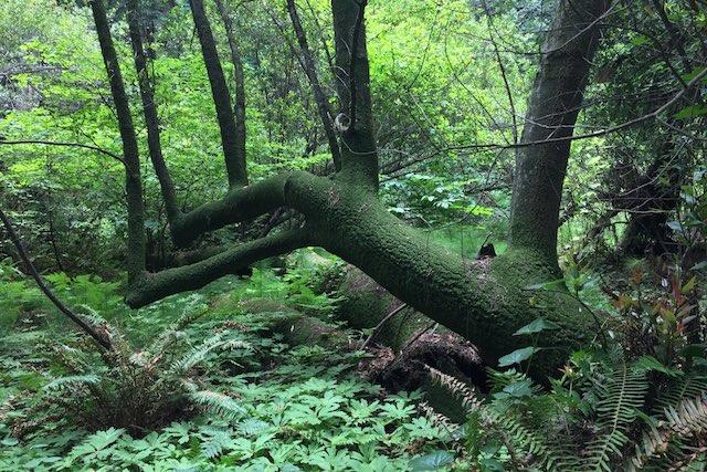 roadtrip_westcoast_muir_woods_national_park_urban_jungle_soulsistermeetsfriends