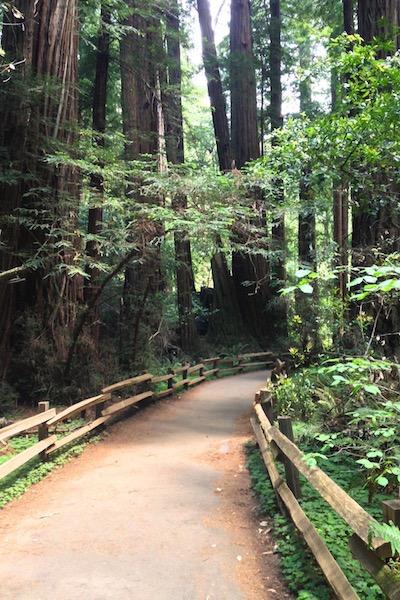 roadtrip_westcoast_muir_woods_redwood_pine_national_park_soulsistermeetsfriends