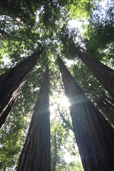 roadtrip_westcoast_muir_woods_redwood_pine__national_park_soulsistermeetsfriends