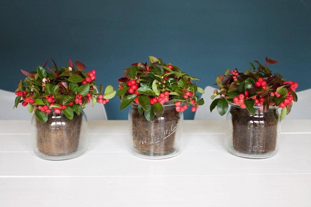 Blumen Tischdeko tischdeko upcycling blumen im weckglas soulsister meets