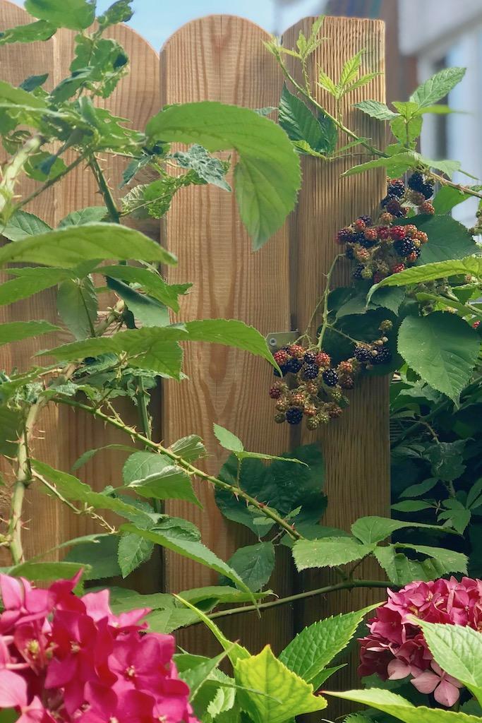 Blogparade #sonntagsglück: Gartenglück & Netzwerken