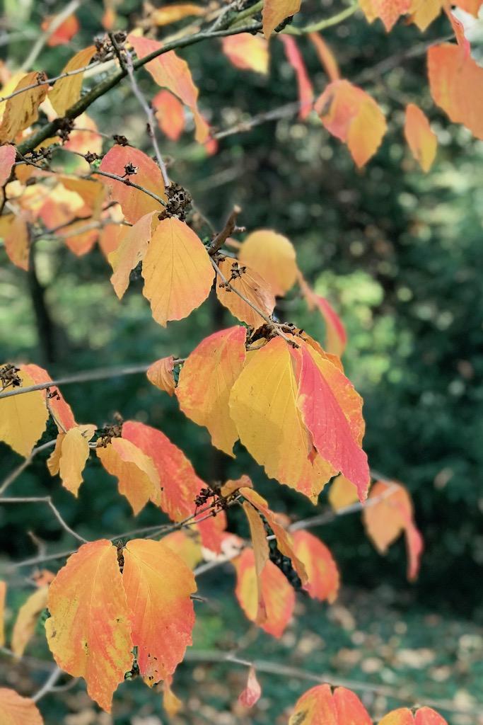 Netzwerken beim #sonntagsglück: vom Loslassen im Herbst