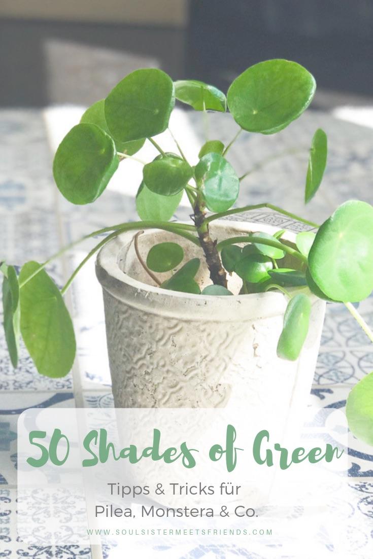 50 Shades of Green: Tipps und Tricks für Pilea, Monstera & Co.