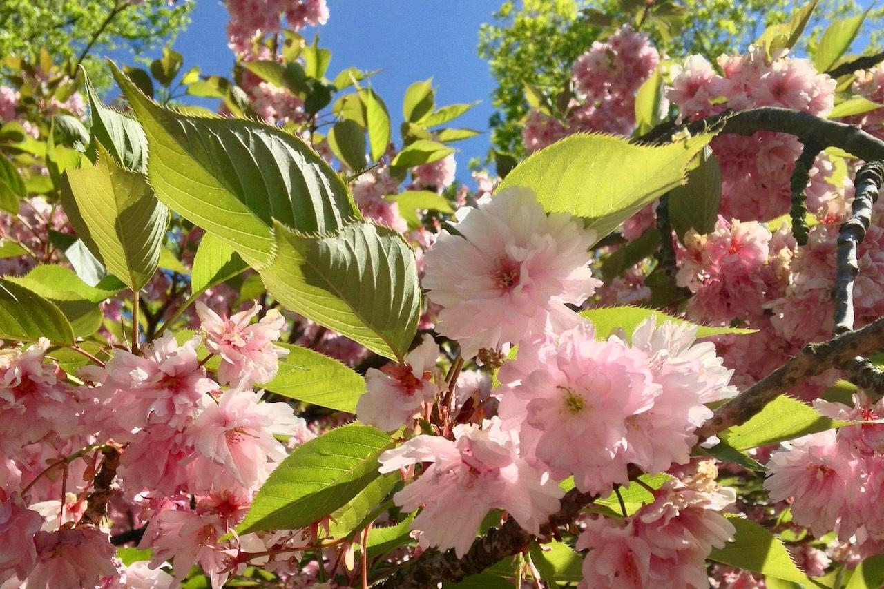 Netzwerken für Blogger: Blogparade #sonntagsglück mit Frühlingsstimmung