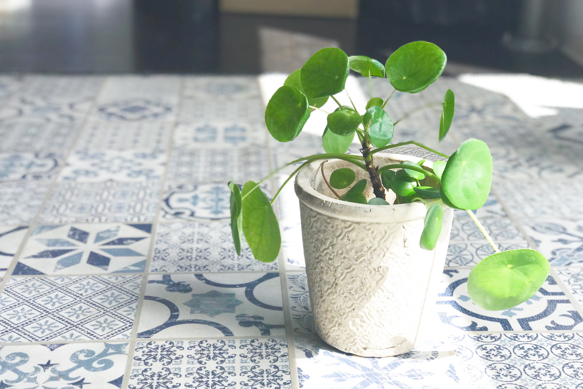Urban Jungle: Pilea, Monster, Efeu & Co.
