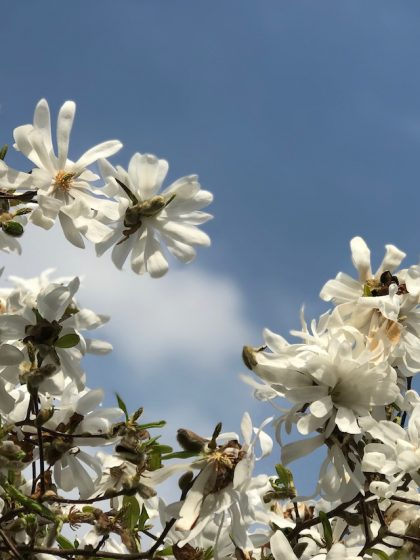 Blogparade #sonntagsglück: Netzwerken für Blogger – und Frühlingsgefühle!