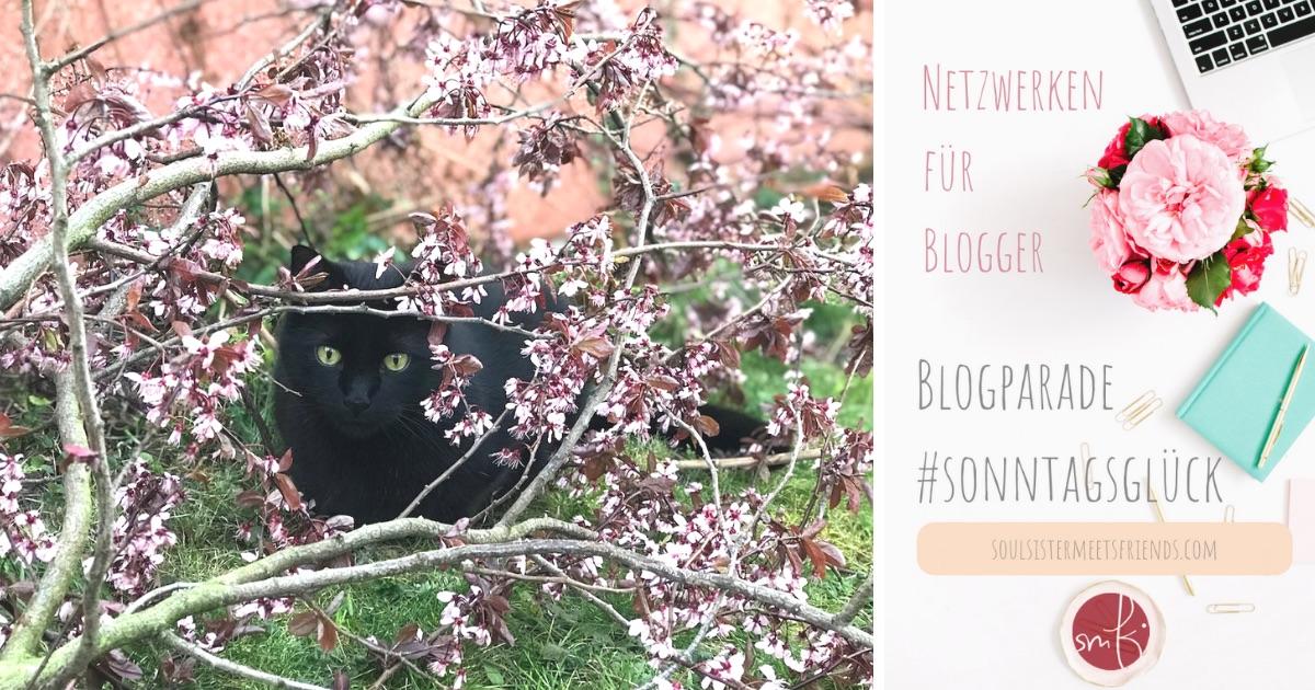 Blogparade #sonntagsglück: Netzwerken für Blogger – heute mal mit Catcontent!