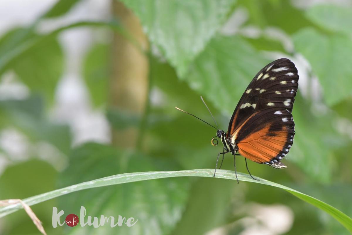 die smf Kolumne: Schmetterlinge lieben leise