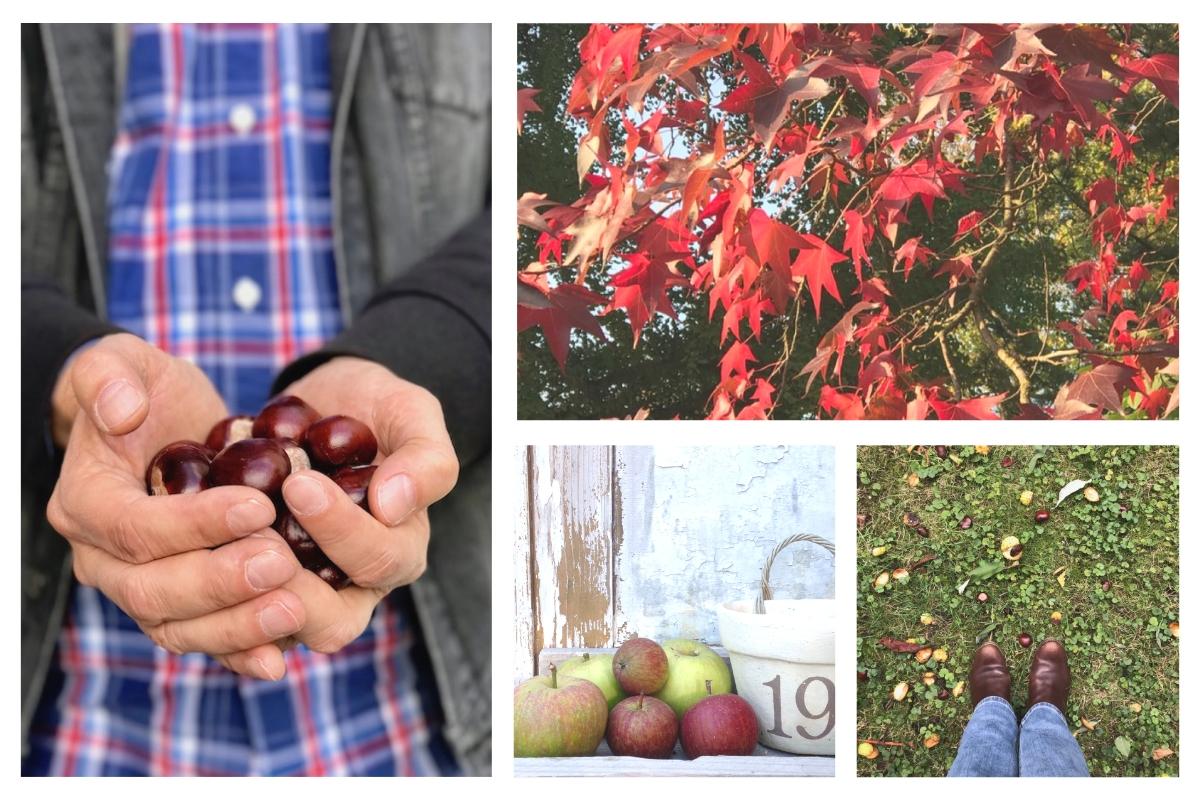Netzwerken für Blogger: Blogparade #sonntagsglück – Kastanien im Herbst