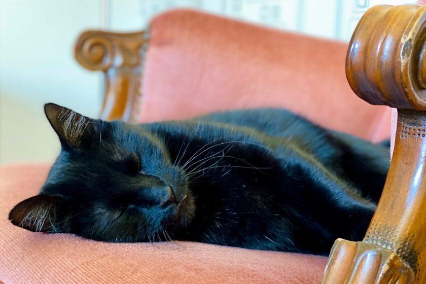 Netzwerken beim #sonntagsglück: Haustiere - wir lieben unseren Kater!