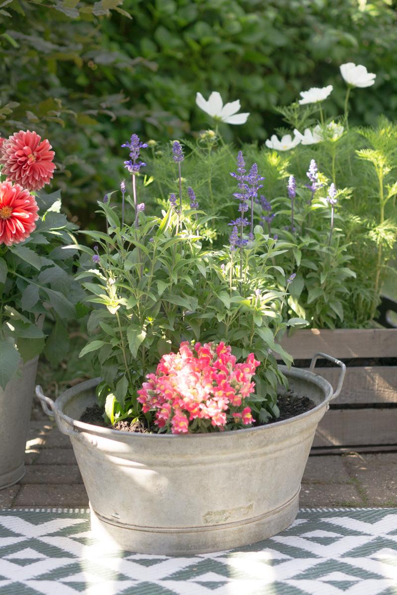 Gartenglück: ein Bauerngarten im Mini-Format für Terrasse oder Balkon