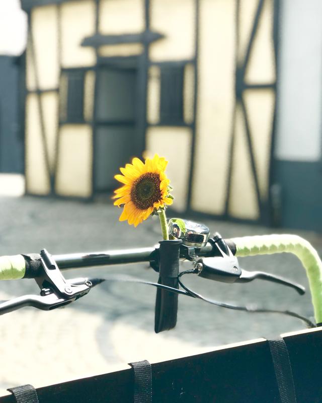 Sonnenblume am Lastenfahrradahrrad